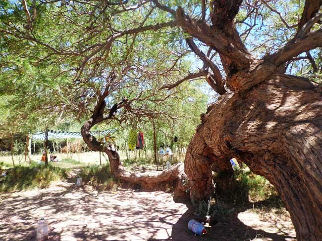 Quilarcay camping san pedro