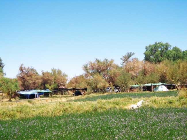 san pedro camping Quilarcay